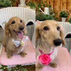 愛犬のPON&COO