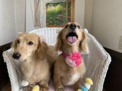 我が家の愛犬たち