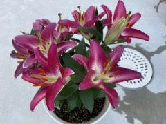 我が家の花💐